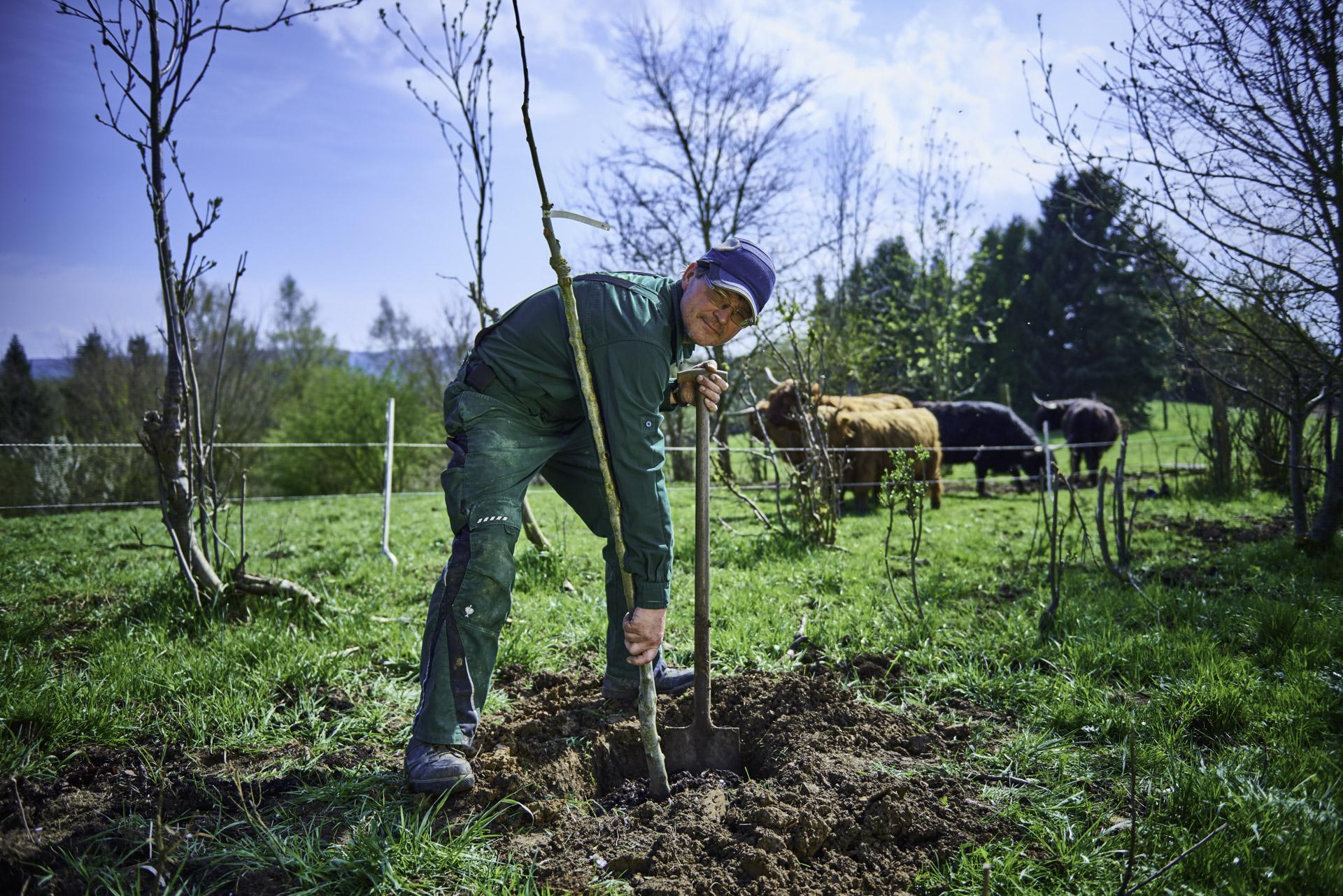 Apfelbaumbepflanzung